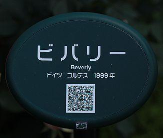 0B0A5680.JPG