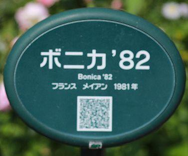 0B0A5684.JPG