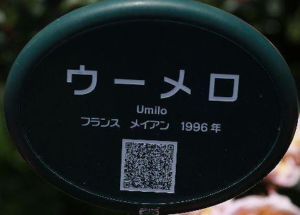 0B0A5701.JPG