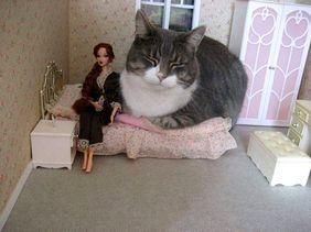 おもしろ猫その4.jpg