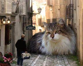おもしろ猫その5.jpg