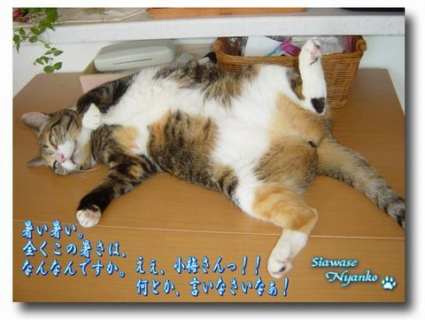 ちゃー子さん友情出演 懐かしの御開帳のコピー.jpg