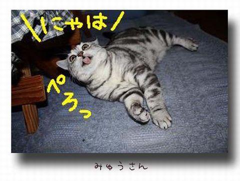 みゅうさん-ぺろっ.jpg
