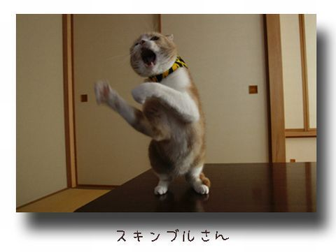 ダンシングスキンブルさん.jpg