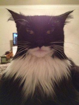 バットマンになりきってみたにゃよ.jpg