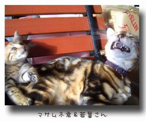 マサムネくん&若葉さん ええ~.jpg