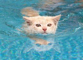 泳ぐにゃ1.jpg