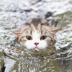 泳ぐにゃ2.jpg