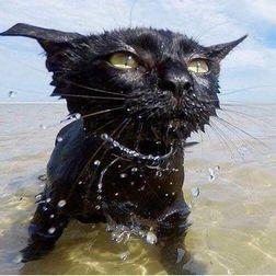 泳ぐにゃ3.jpg