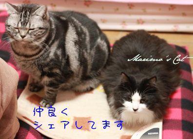 m_1221-a-72d7b.jpg